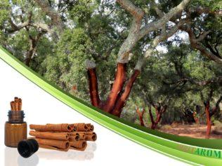 Кора Корицы (Cinnamon Bark)
