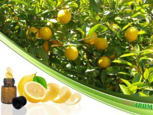 Лимон (Lemon)