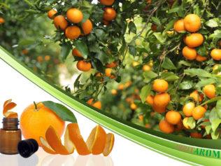 Апельсин (Orange)